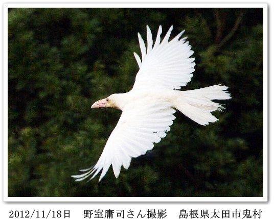 白いカラスの飛ぶ画像(野室さん...