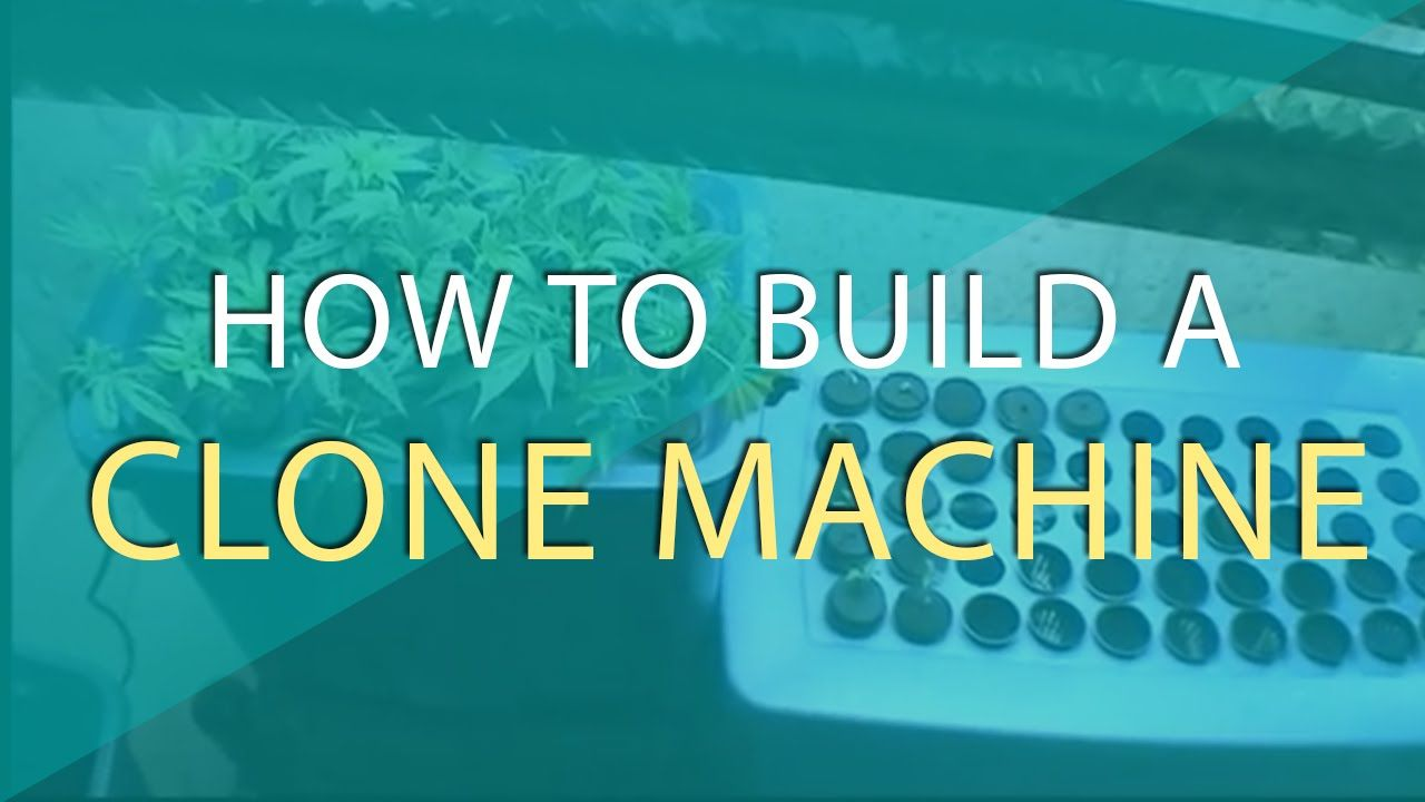 How To Build A Clone Machine The Weed Scene Plants