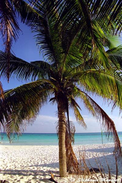 Playa Del Carmen Beautiful White Sandy Playa Del Carmen See