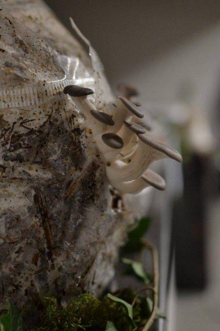 1000 ideas about faire pousser des champignons on pinterest dessin champignon dessin de. Black Bedroom Furniture Sets. Home Design Ideas