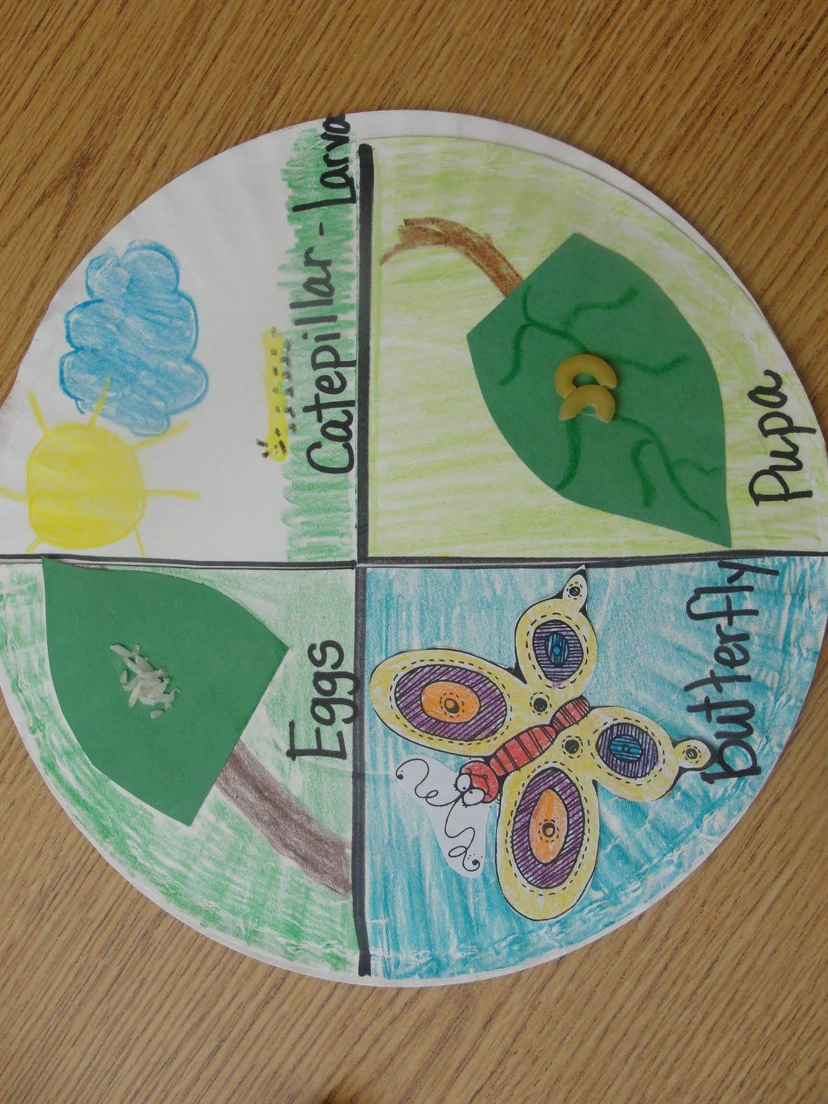 Life Cycle Of Butterfly On Paper Plate