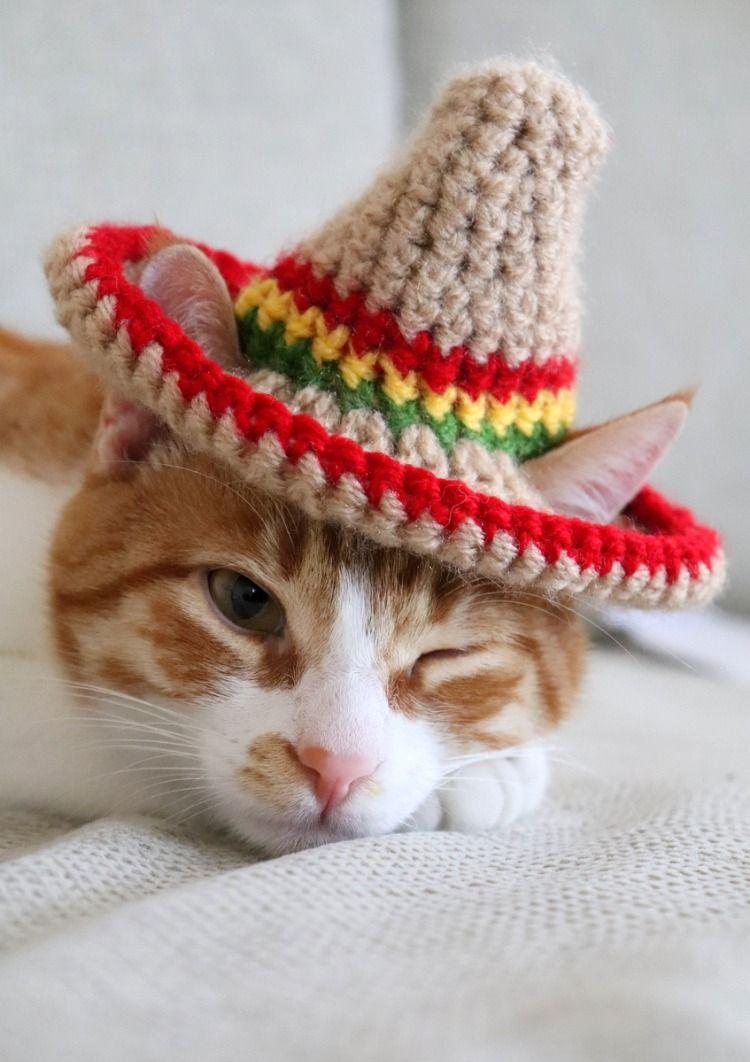 Sombrero For Cats Pawsomecrochet Crochet Cat Hat Cat Hat Pattern Cat Hat