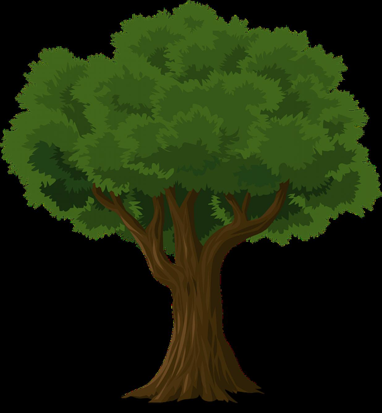 Дерево дуб картинка на белом фоне