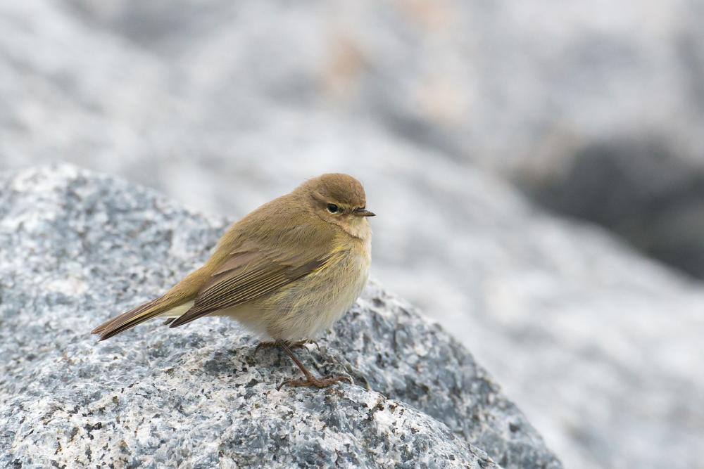 Pin Op Birds