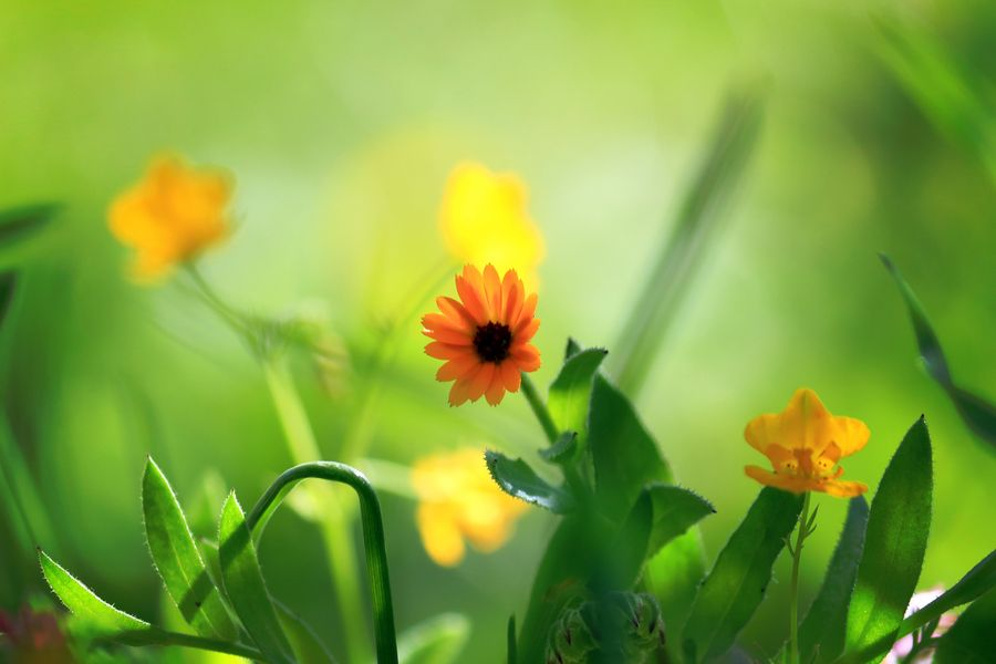 ♡ Welcome Spring ツ by A-zaghamim photography, via 500px