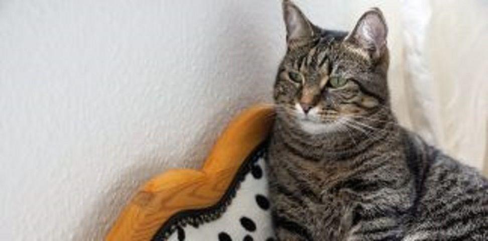 ส งจำเป นสำหร บ น องแมว ม อะไรบ าง วาไรต ไทยสบาย ในป 2021 ส ตว เล ยง ส น ข แมว