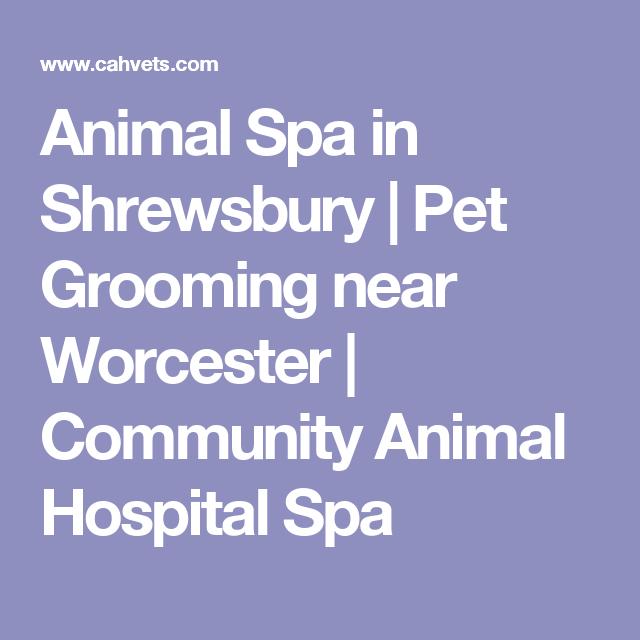 Animal Spa In Shrewsbury Pet Grooming Near Worcester Community Animal Hospital Spa Animal Hospital Pet Grooming Shrewsbury