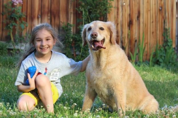 The Golden Retriever Best Dogs For Kids 20 Dog Breeds Good With