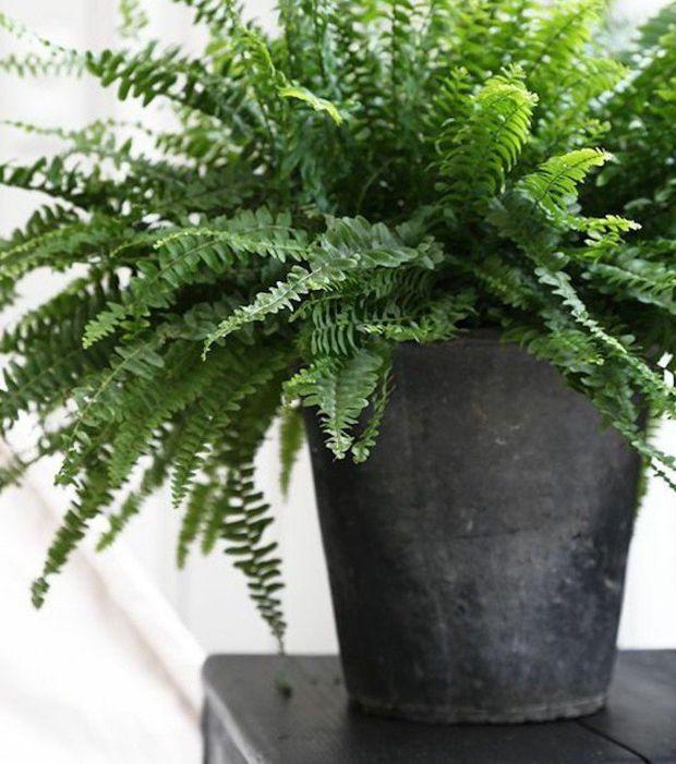 plantes d polluantes 20 esp ces avoir pour un. Black Bedroom Furniture Sets. Home Design Ideas