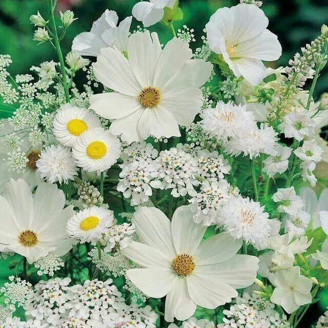 Красивые картинки белые цветы