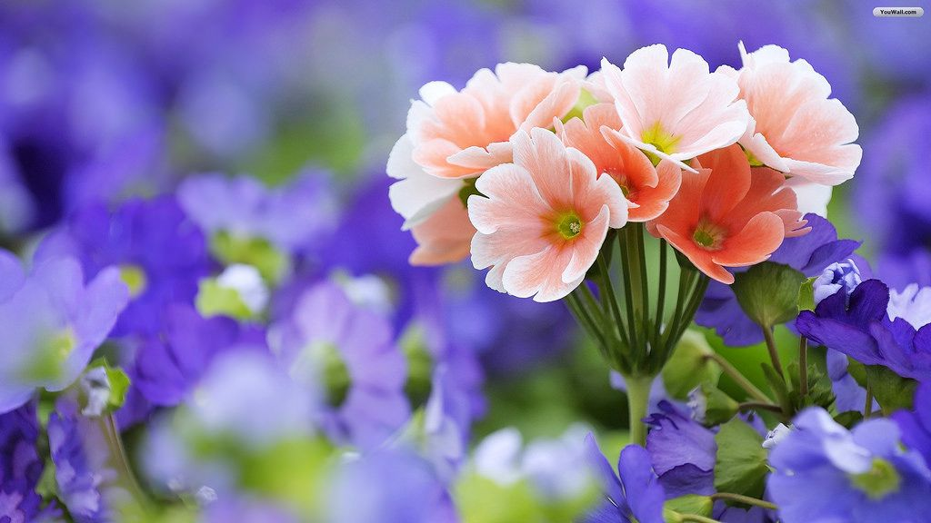 Beautiful Flower Wallpapers For Desktop Animated Mobile