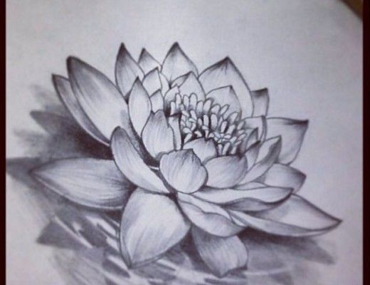 Realistic Lotus Flower Tattoo Image Photos Pictures And Lotus Flower Drawing Water Lily Tattoos Flower Drawing