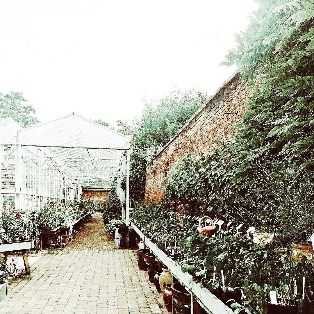 Walled Garden Nursery Bloom Suffolk