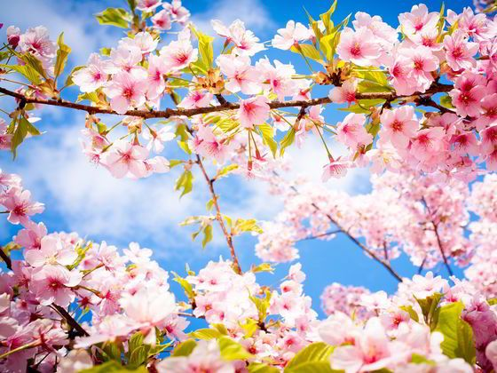 What Spring Color Are You Spring Wallpaper Spring Pictures Cherry Blossom Wallpaper