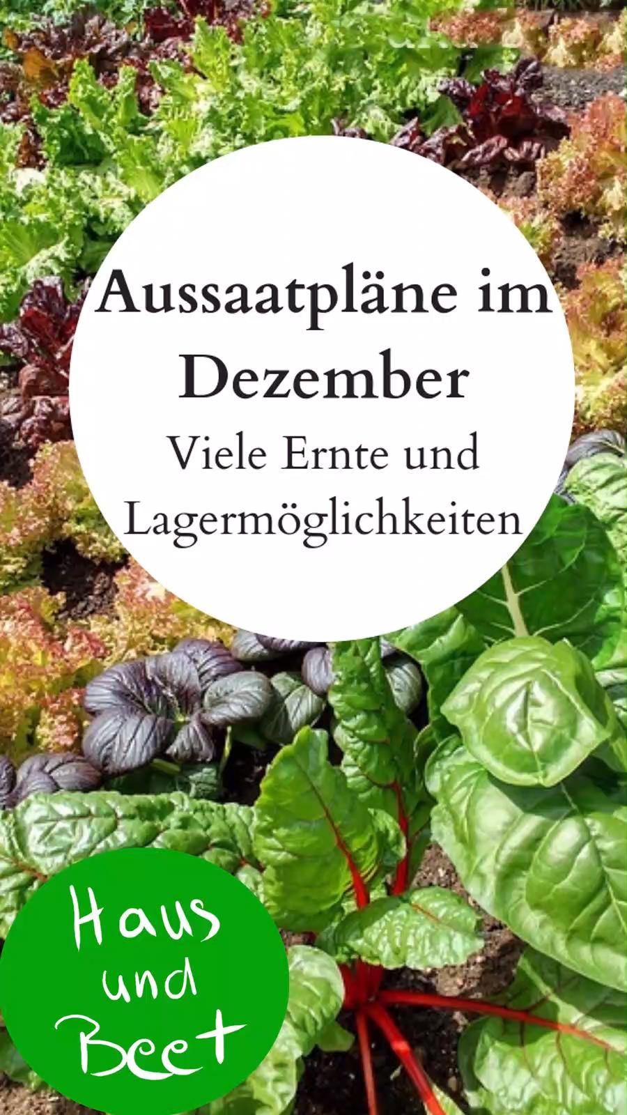Photo of Aussaatpläne im Dezember – Viele Ernte und Lagermöglichkeiten