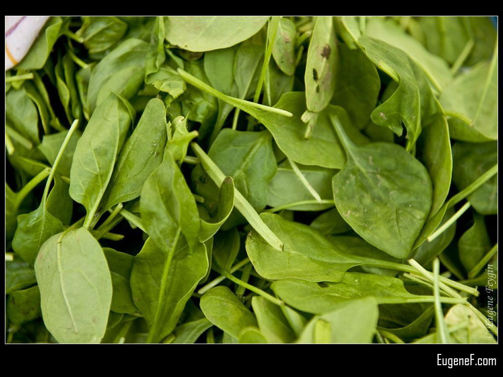 Baby Spinach #GreenFlowers #freewallpapers