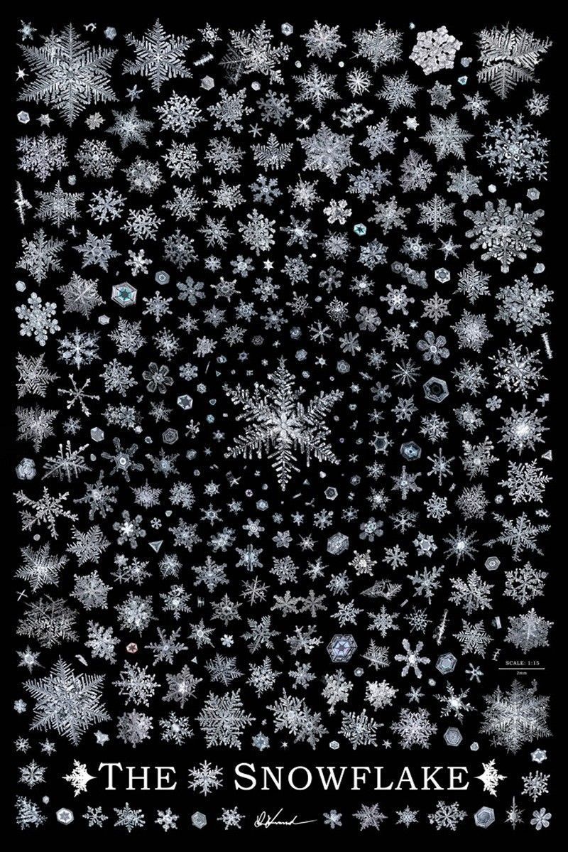 Photographer Unravels Snowflake Mysteries By Spending 2,500 Hours Capturing Detailed Images of Their Wonders