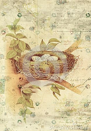 Nest and Bird Eggs Botanical Vintage Style Wall Art with Textured ...