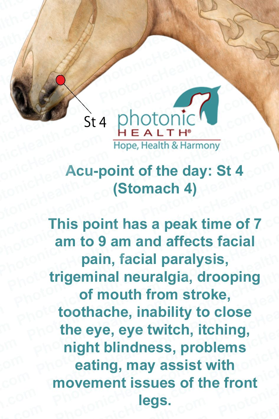 Acu-point of the day! Stomach 4 Want to learn more? Click here