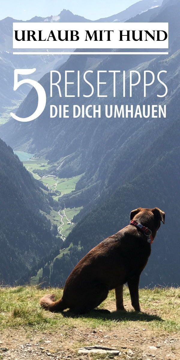 Urlaub Wandern Berge Urlaubmithund Hunde Hundehaltung Hunderassen Urlaub Mit Hund Hund Reisen Hunde