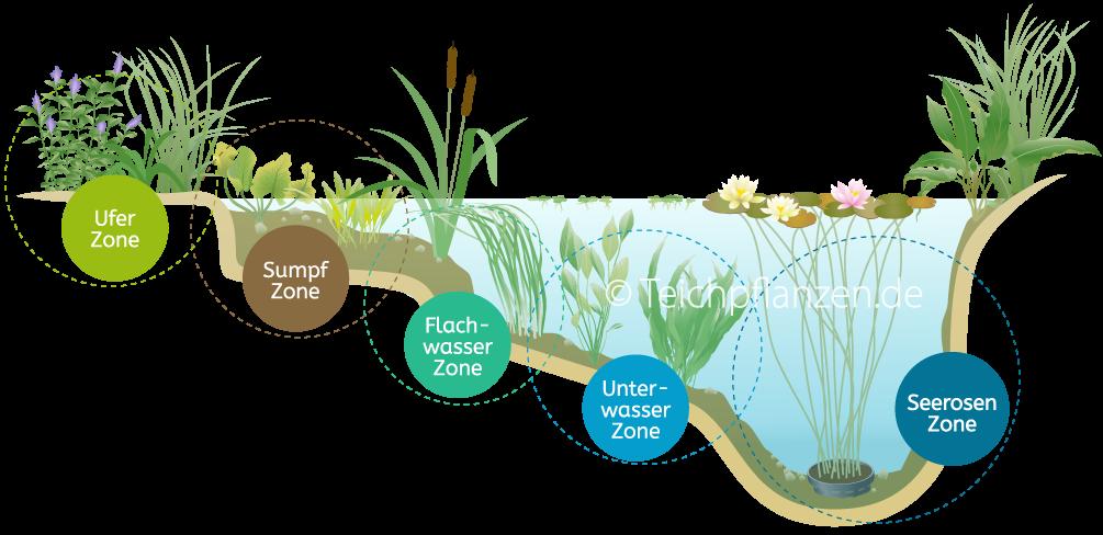teichpflanzen f r flachwasserzone google suche living space living spaces und space. Black Bedroom Furniture Sets. Home Design Ideas