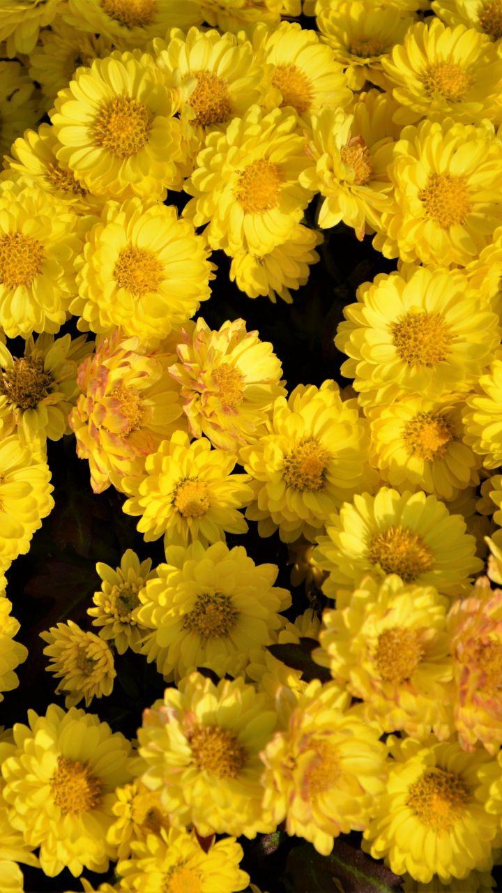 Yellow flowers, arrangement, 720x1280 wallpaper Yellow