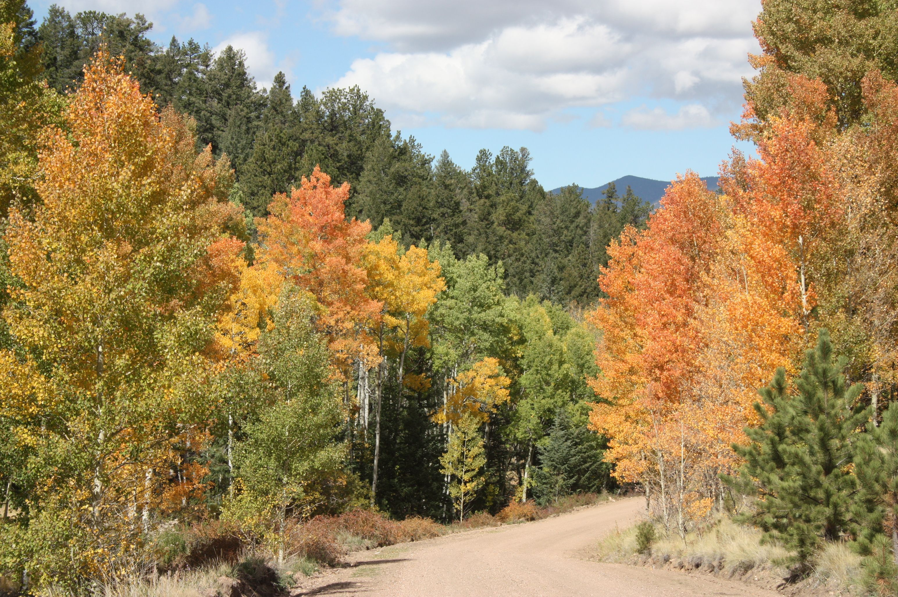 Fall, Guffey CO | Guffey, Colorado | Colorado, Country ...