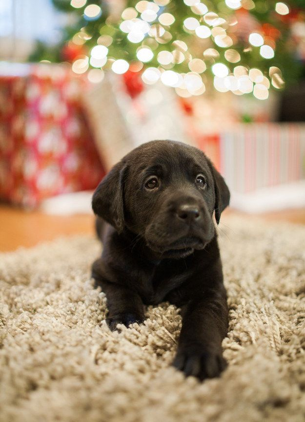 And finally, this Christmas puppy who's going to be the best present anyone could ever ask for.