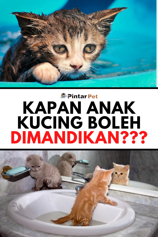 Memandikan Anak Kucing : memandikan, kucing, Memandikan, Kucing, Secara, Mudah, Kucing,