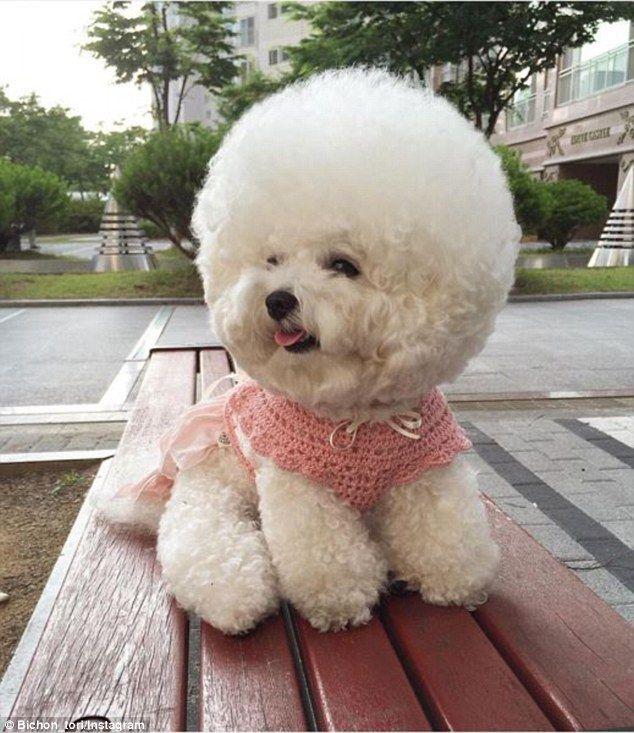Wonderful Fluff Ball Adorable Dog - f4f73ce03876dd0d8743a0c9d614941a  Trends_782482  .jpg