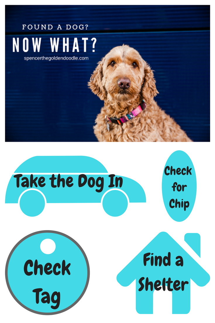 Find a Lost Dog Dogs, Goldendoodle, Losing a dog