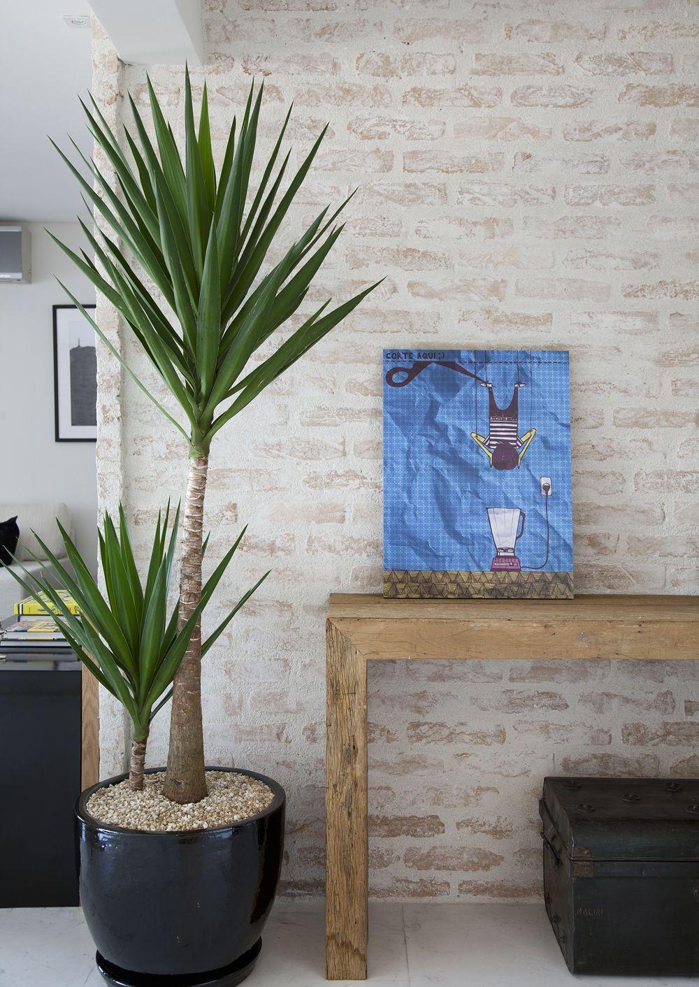 Plantas Decorativas Para Sala