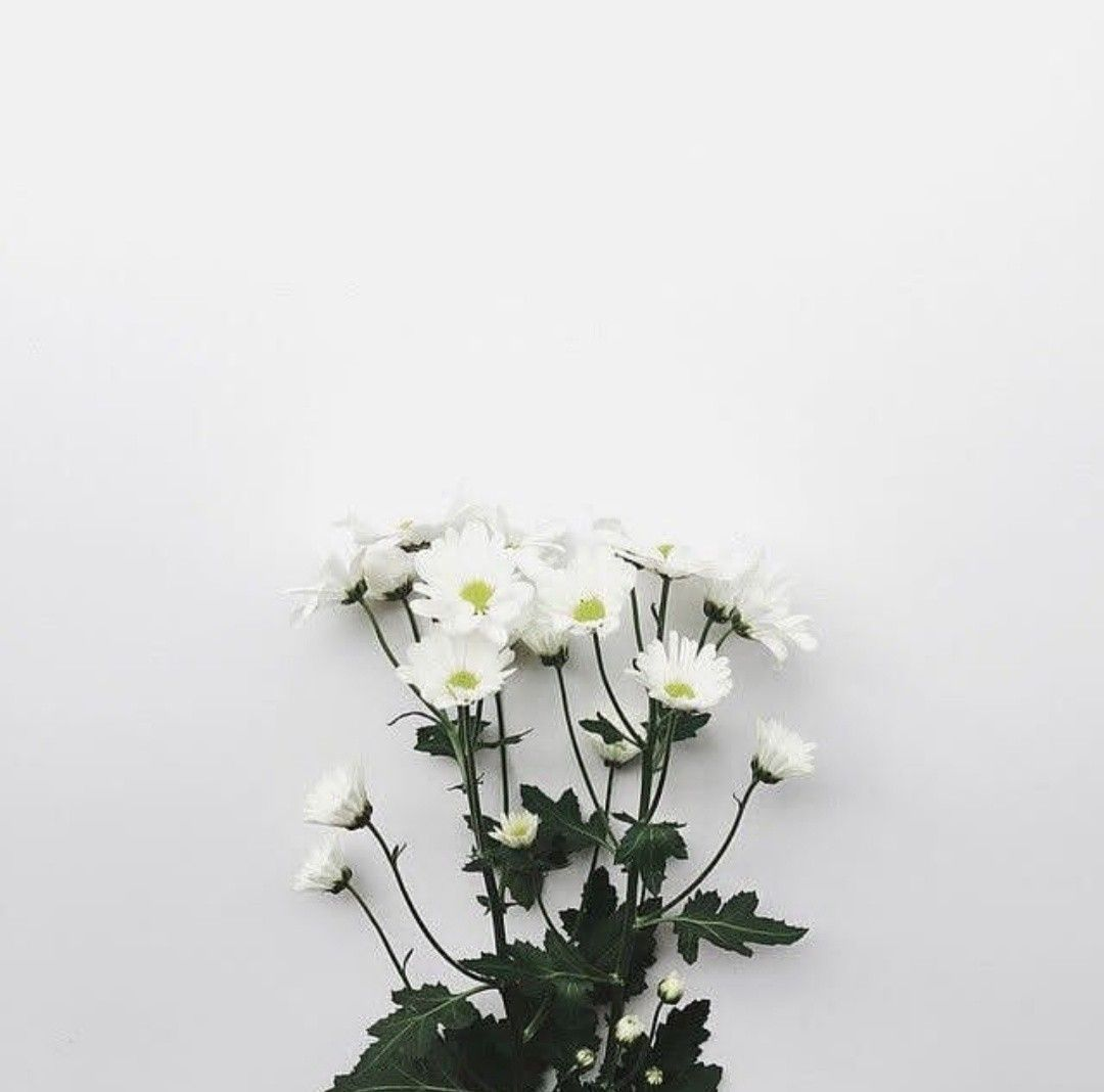 Pin by Kelly on flowers (With images)   White flowers ...