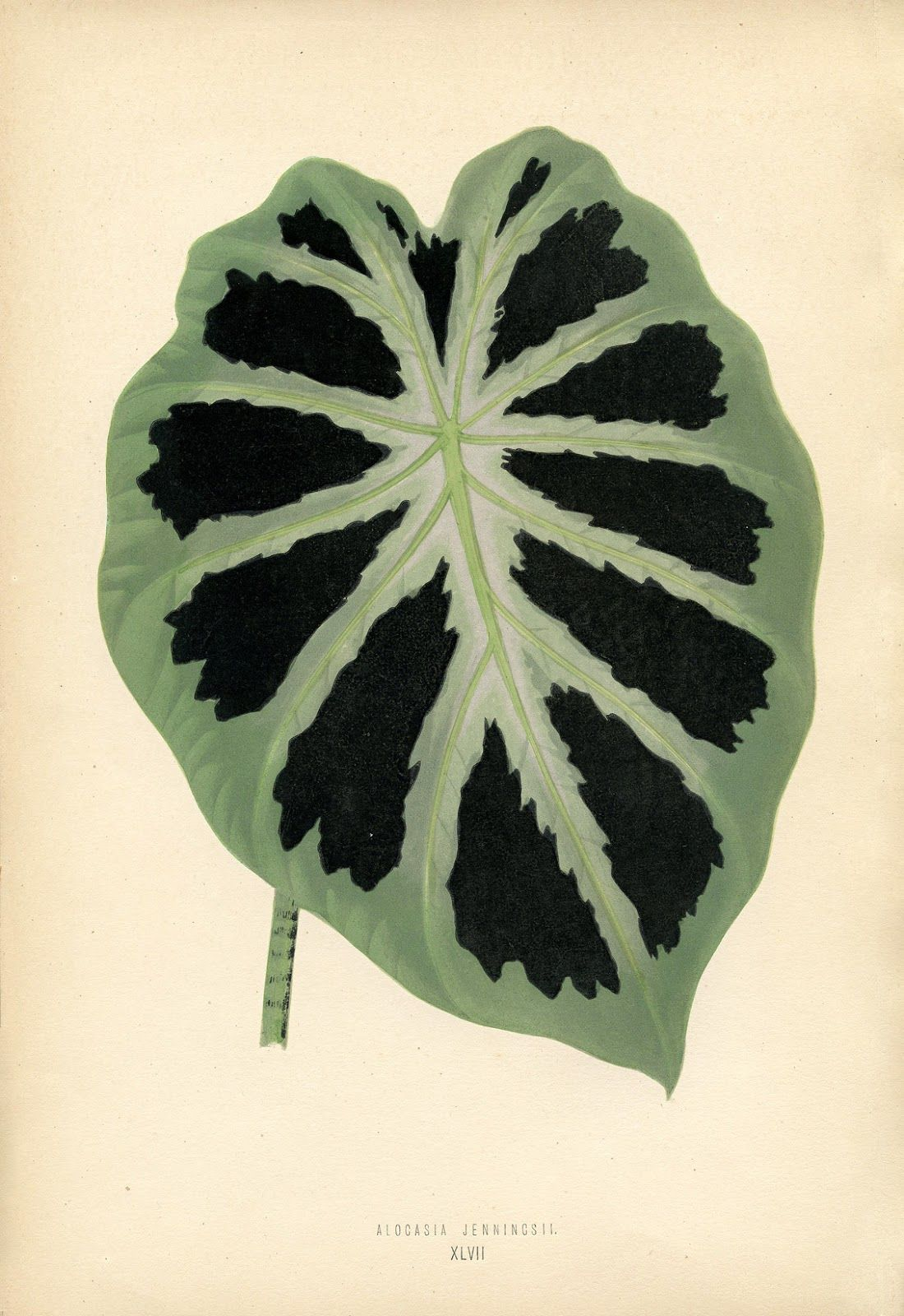 Vintage Printable Botanical Leaf From The Graphics Fairy