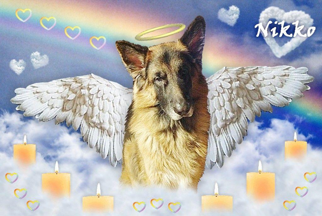 (at)BCB2912 doggie #Nikko