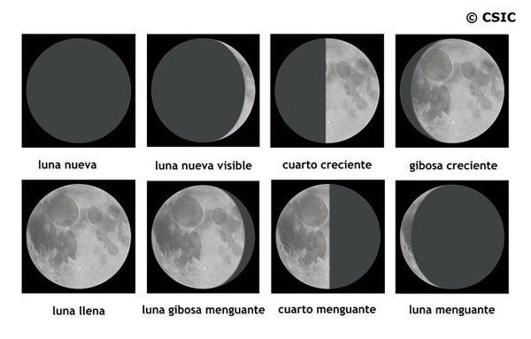 Las fases de la Luna con galletas Oreo - Moon Phases with ...