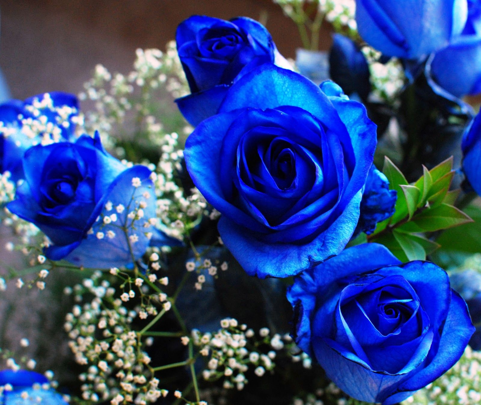 Pictures+Of+Blue+Flowers Bright blue against a