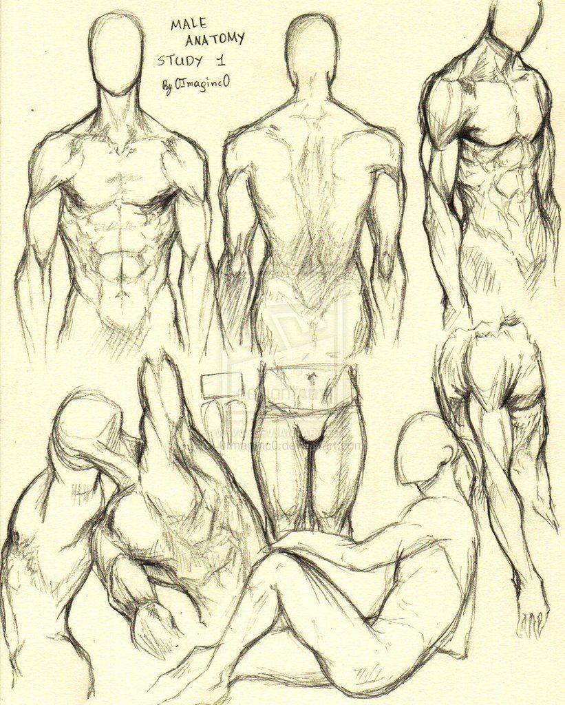 рисуем анатомия человека в картинках под