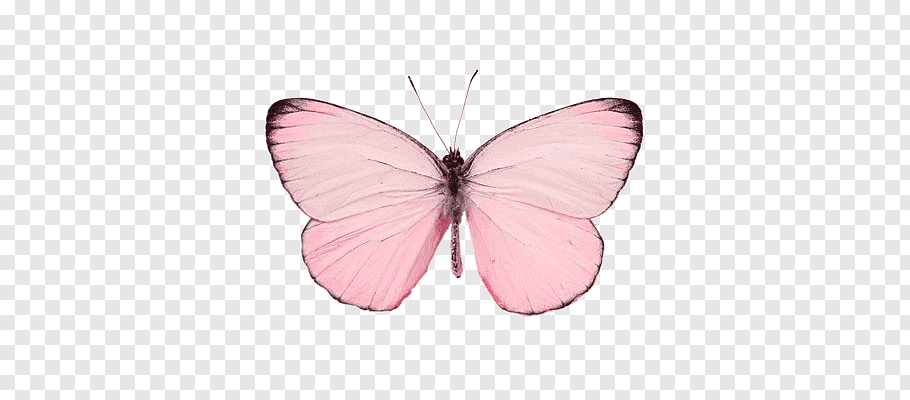 R4ndom Pink Butterfly Png Pink Butterfly Butterfly Illustration Butterfly Clip Art