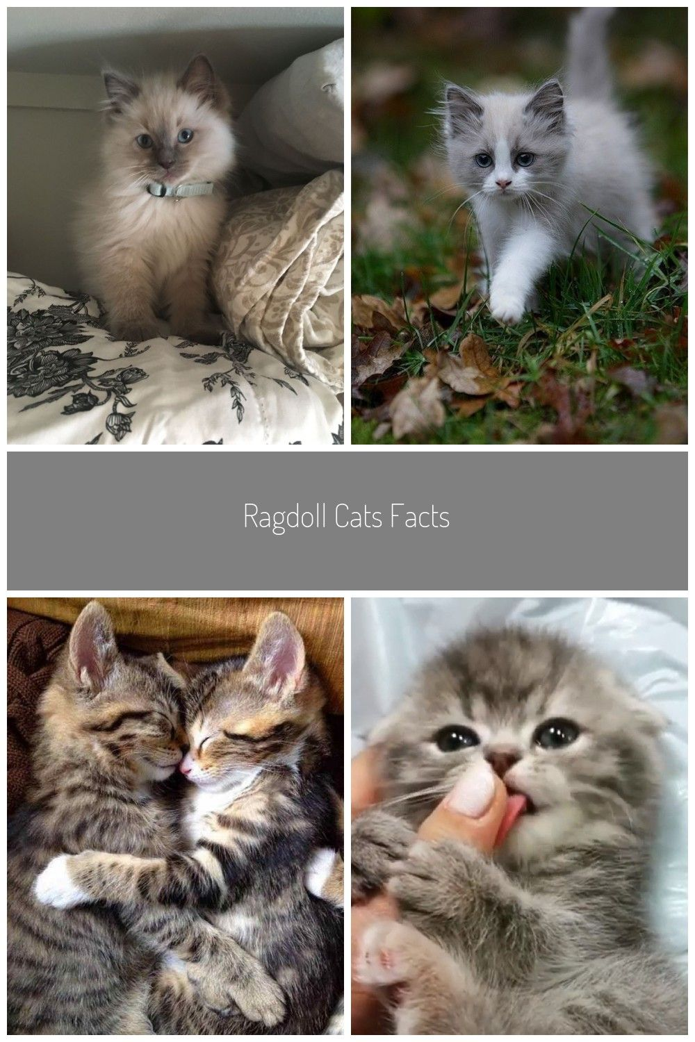 Top 72 Funny Cats And Kittens Pictures Baby Cats Cute Cats Kitten Pictures