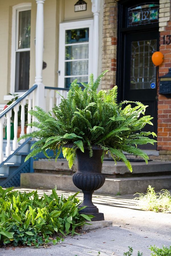 Classic Urn Fern Either Side Of Front Door Outdoors