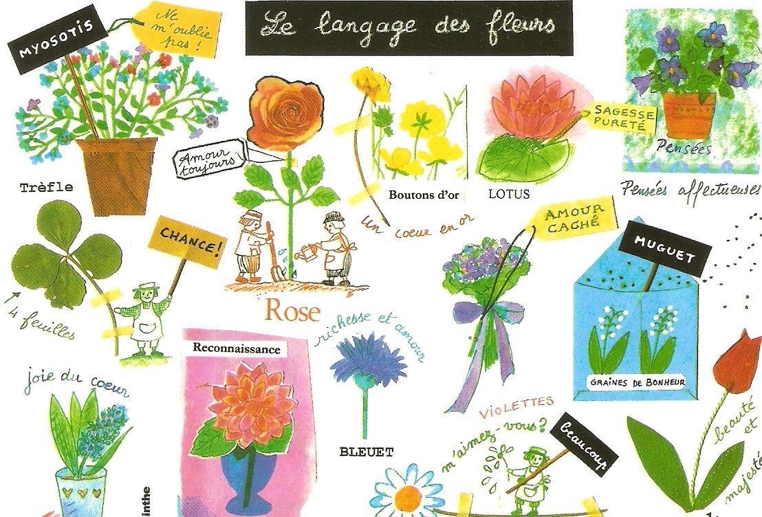 le langage des fleurs imagiers fle pinterest lengua y franceses. Black Bedroom Furniture Sets. Home Design Ideas