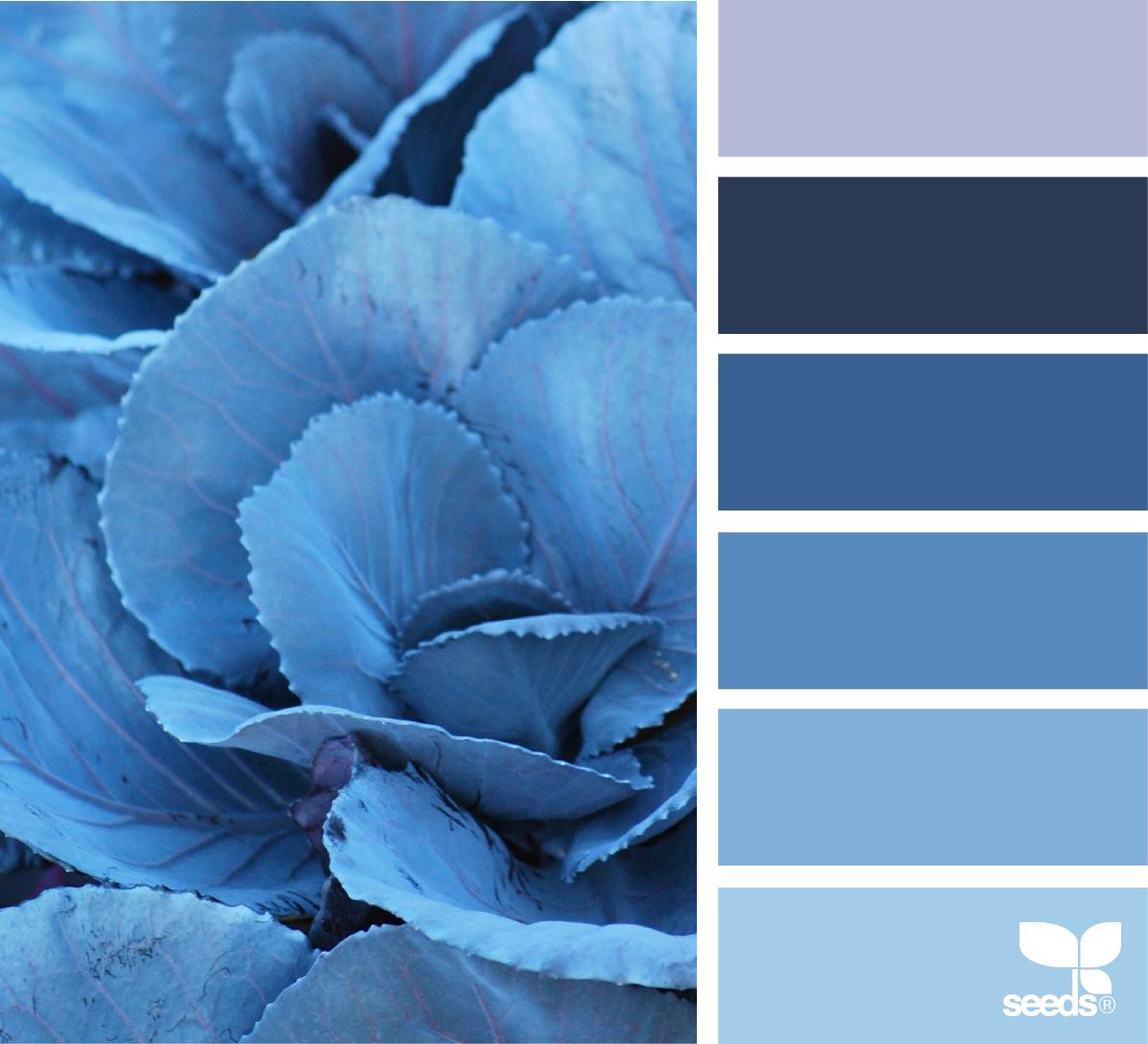 рядом сочетание цветов в картинках синий него