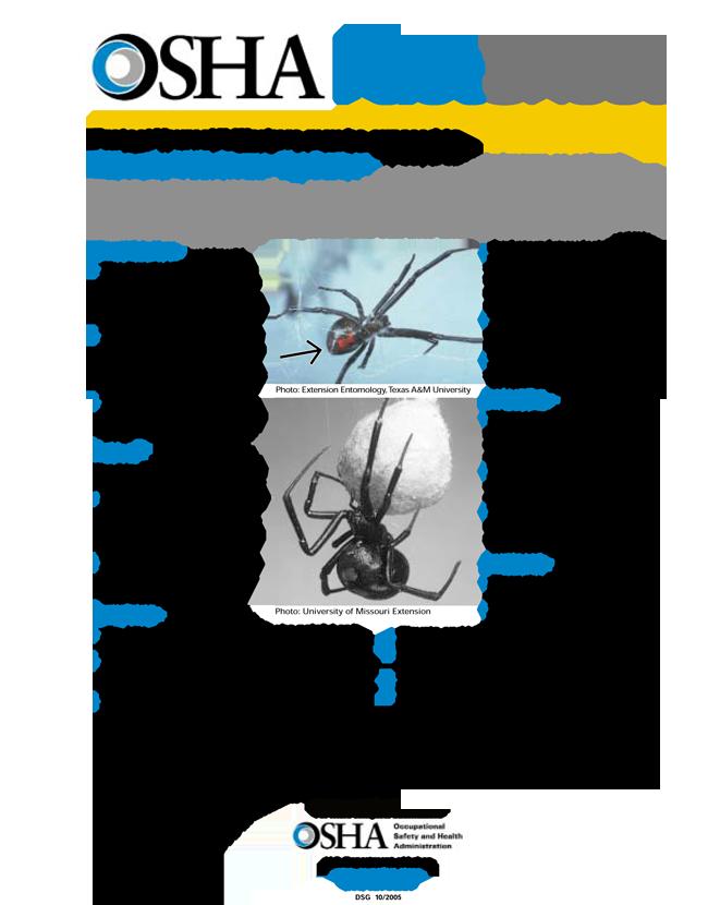 Osha Black Widow Fact Sheet Black Widow Spider Fact Black Widow Spider