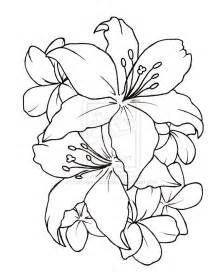 lilly borchert