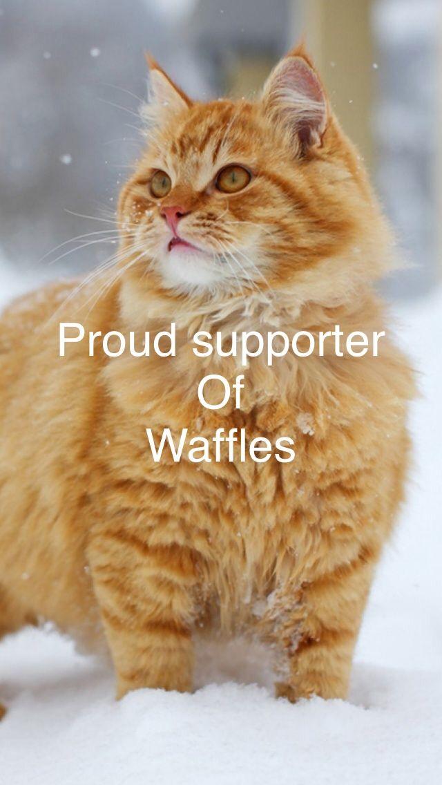 Pin By Evakat On Waffles Orange Tabby Cats Cats Beautiful Cats