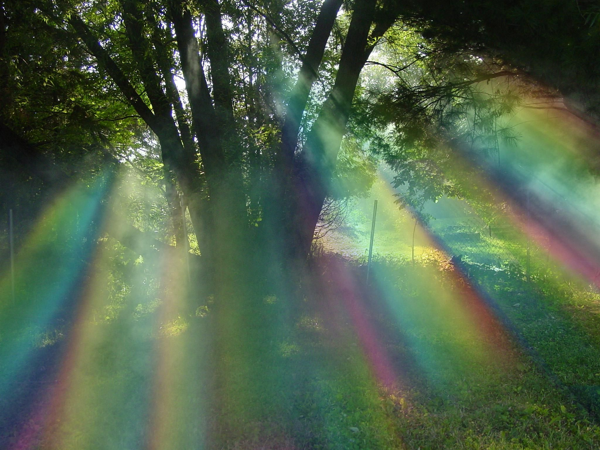 Willow tree with magnificent rainbow colors | My Sacred Trees ...