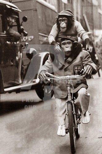 A Monkey Could Ride Piggy Back On A Bike Monkey Art Africa