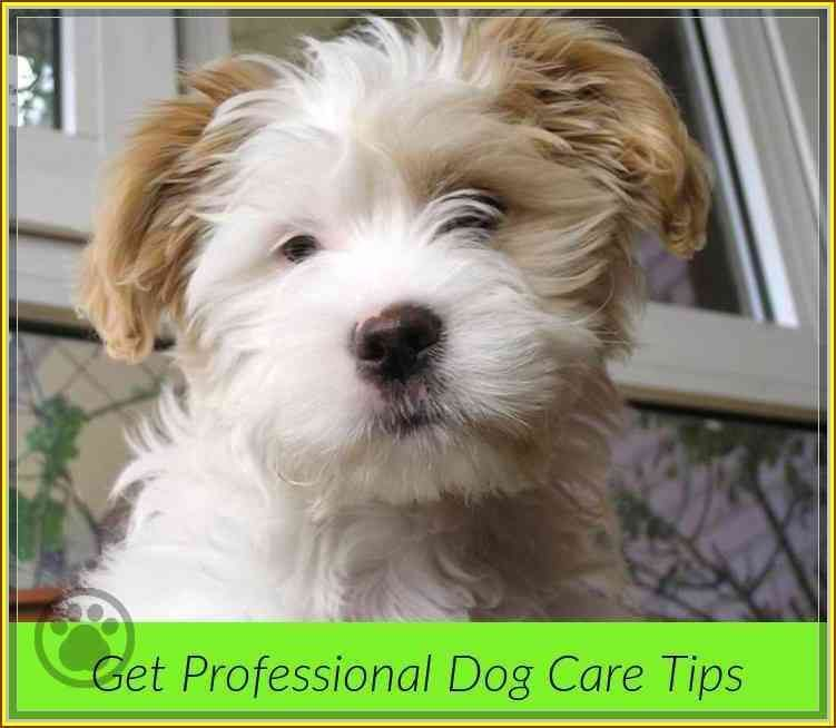 Taking Care Of Fido Dog Care Tips Dog Care Tips Dog Care Dogs