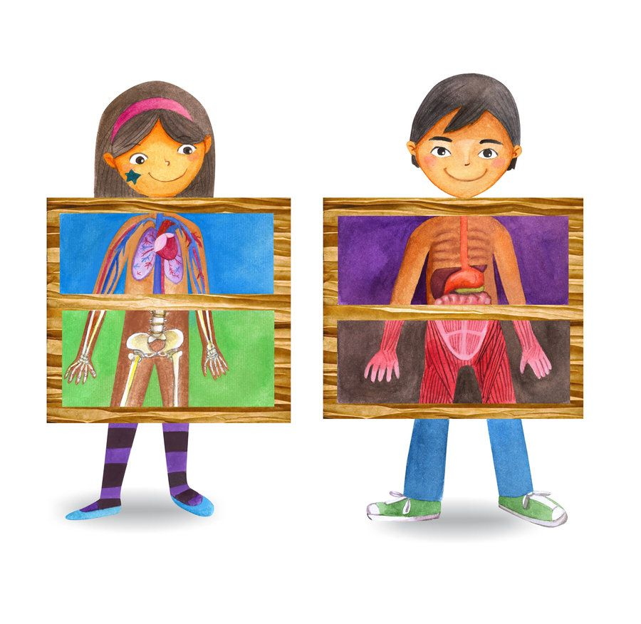 Image result for the human body systems for kids clip art